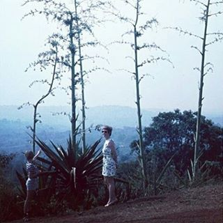 "Says @t_bone_bambi of this photo taken in the 70s, ""On the way home from a day trip to Entebbe we found these Agaves in bloom. My mother loves tropic plants. Whenever I want to know something about plants, there is no need for Wikipedia, I just ask my mother."" #mystoryhouse #savefamilyphotos #oldfamilyphotos #childhoodmemories #70s #35mm #uganda #seventies"