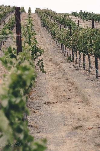 Caliza-winery.jpg