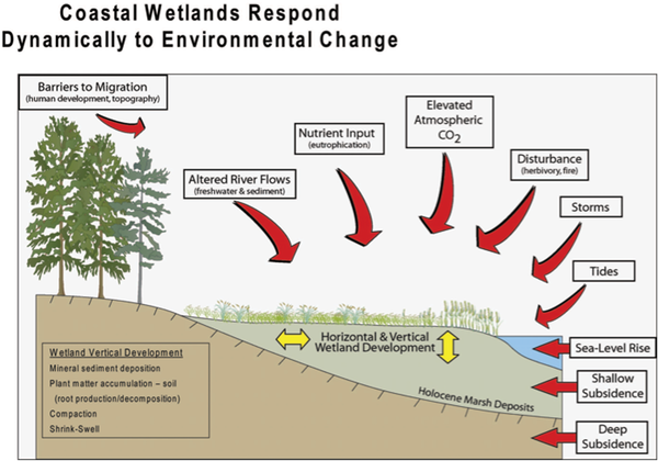 Cahoon et al via USGS ,  CC BY-ND