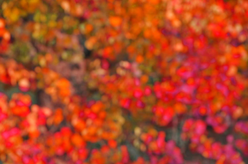 SLF_1744-1.5fallblur.jpg