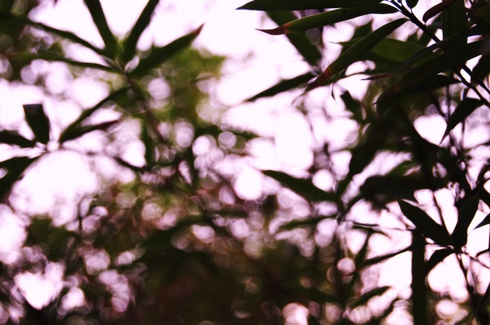 DSC_8679art-blurrytrees.JPG