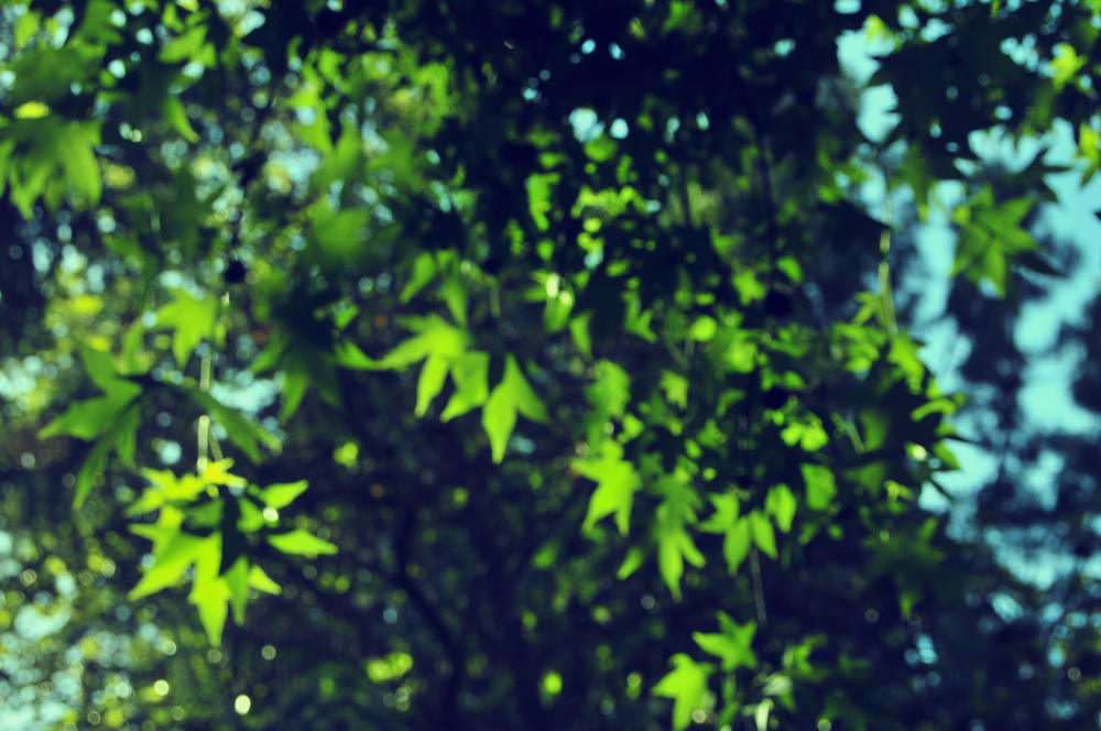 SLF_5486kaleidascope2.jpg