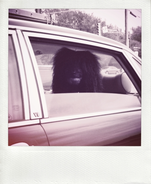 doginjaguarbackseat2-pola_effected.jpg