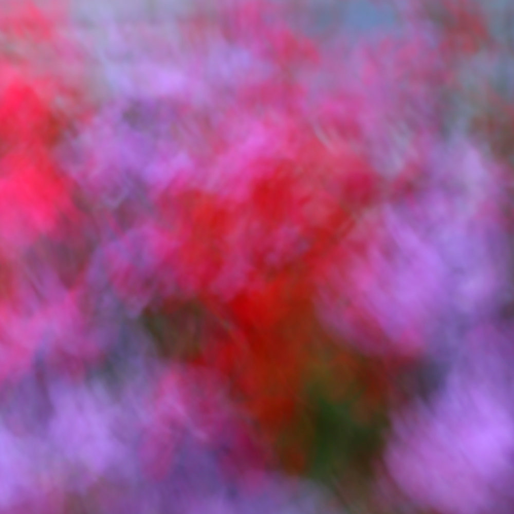 S1__2132blurredflowers1-sq.jpg