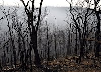 The landscape near Kinglake, which was devastated by the Black Saturday fires. Photo: Angela Wylie - The Age 25 February 2009