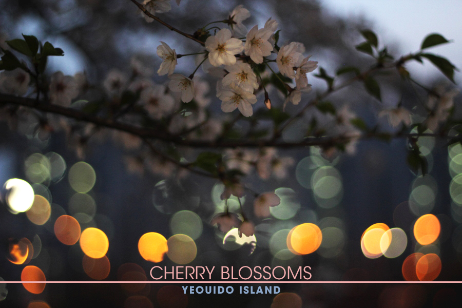 Cherry Blossoms Header.jpg