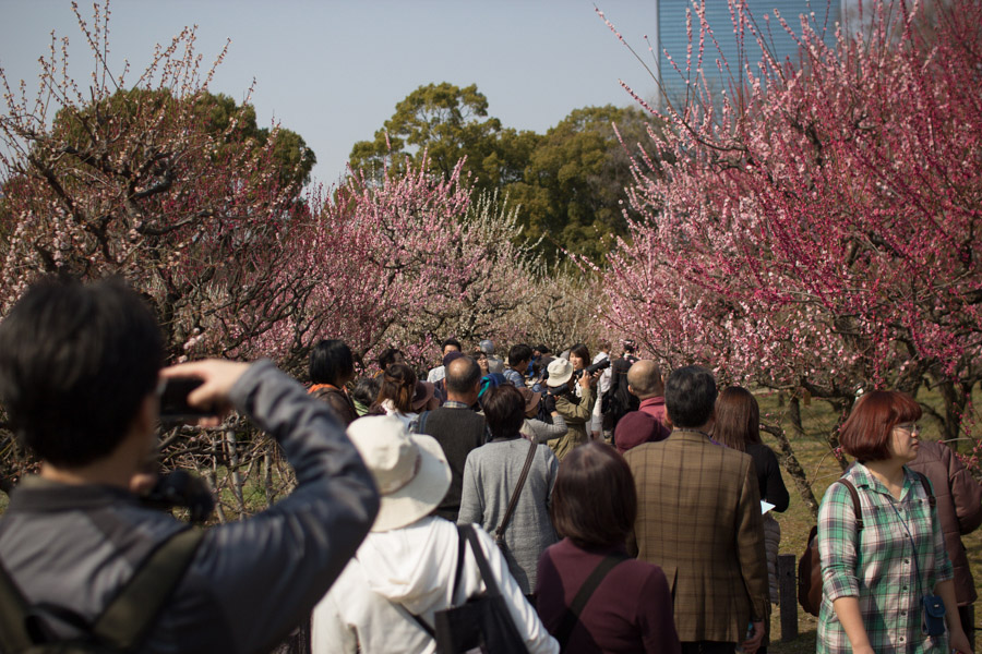 plum_blossom_crowd_osaka_japan
