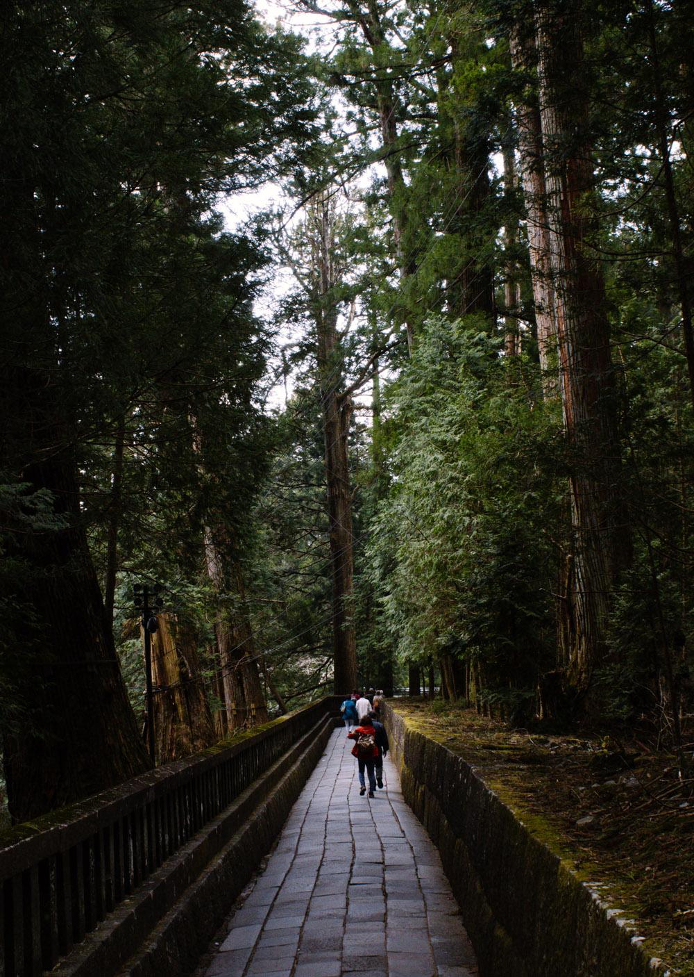 Nikko trees