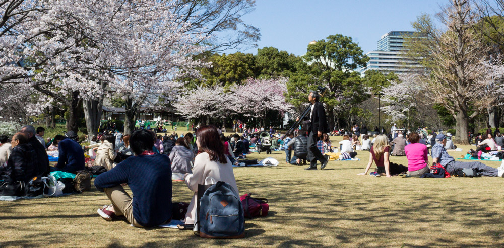 Families and friends picnic under cherry blossoms near Nippon Budokan