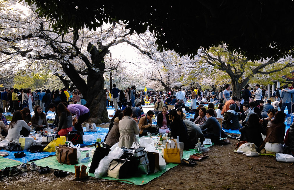 Hanami in Yoyogi Park in central Tokyo