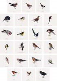 Jamie Shovlin, The Birds in her Garden from the Twitcher, 2004-06, digital photograph