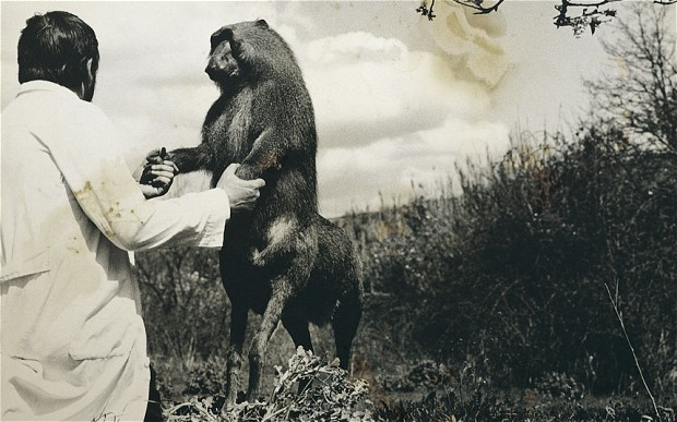 Joan Fontcuberta, photograph of the artist with  Centaurus Neandertalensis , part of the  Fauna  series, 1987