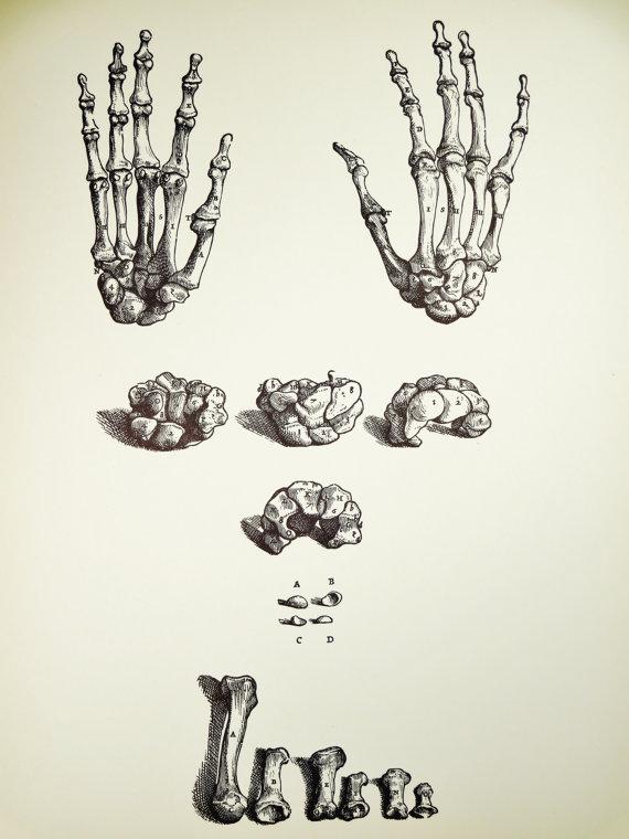Hand Anatomy Poster
