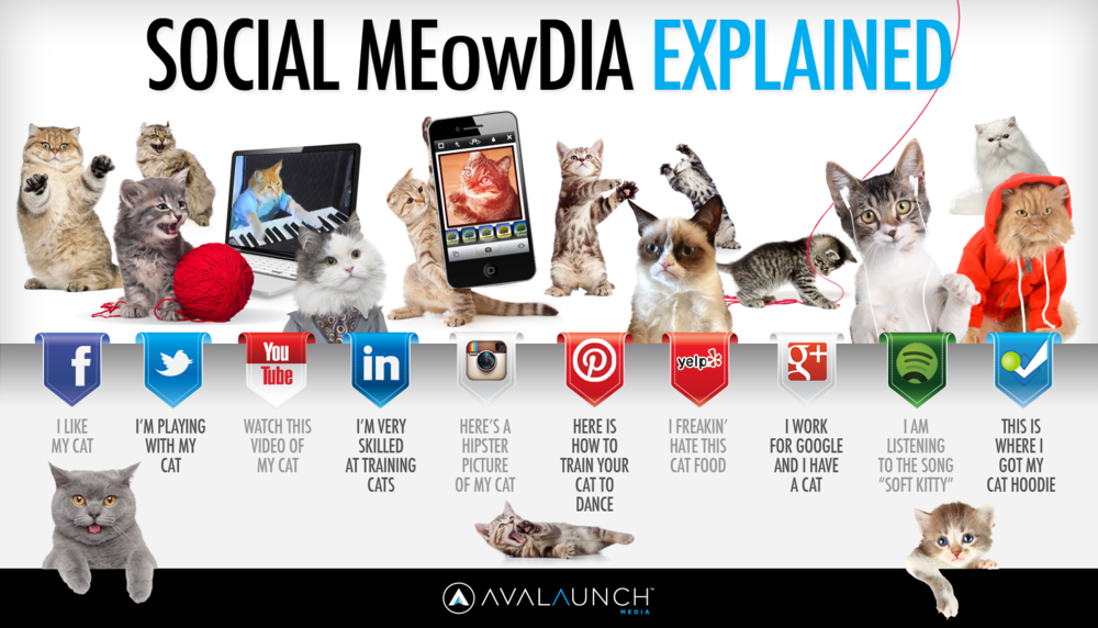 social-media-explained-by-cute-cats_5127ca6880db9.png