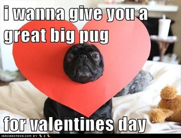 pug-dogs-valentines-day-pictures.jpg