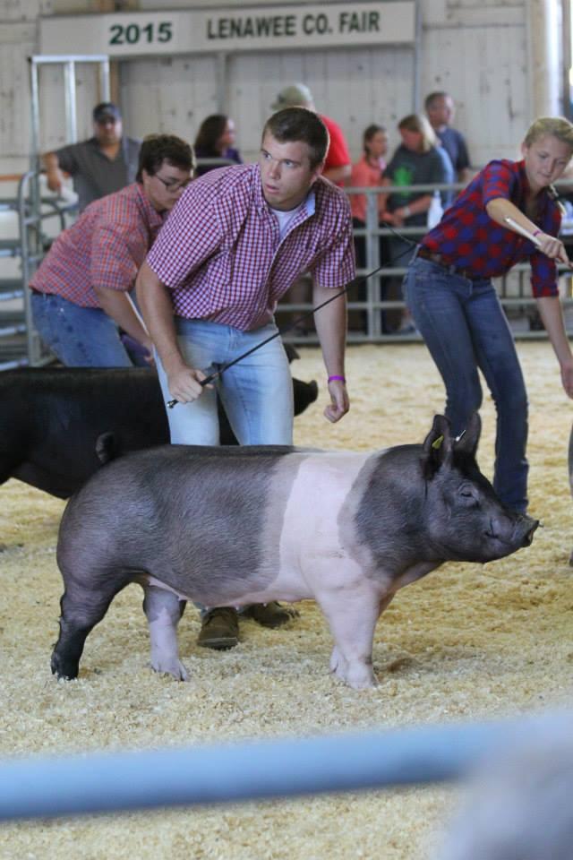 Showing Pig.jpg