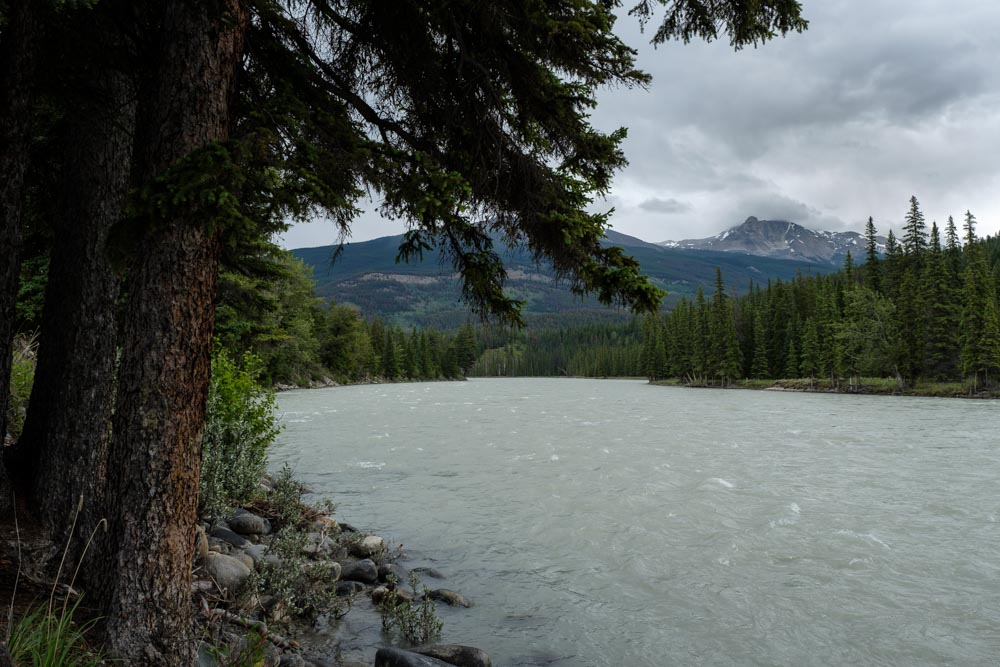 Hiking along the Athabasca River
