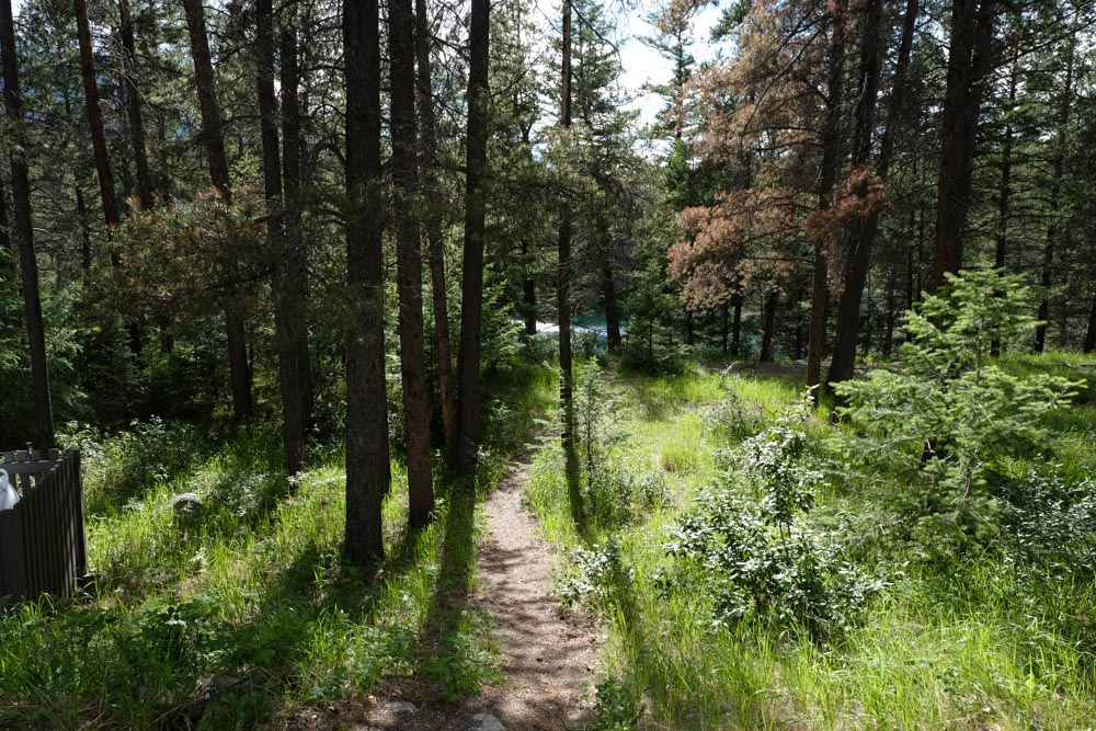 Path through forest to lake