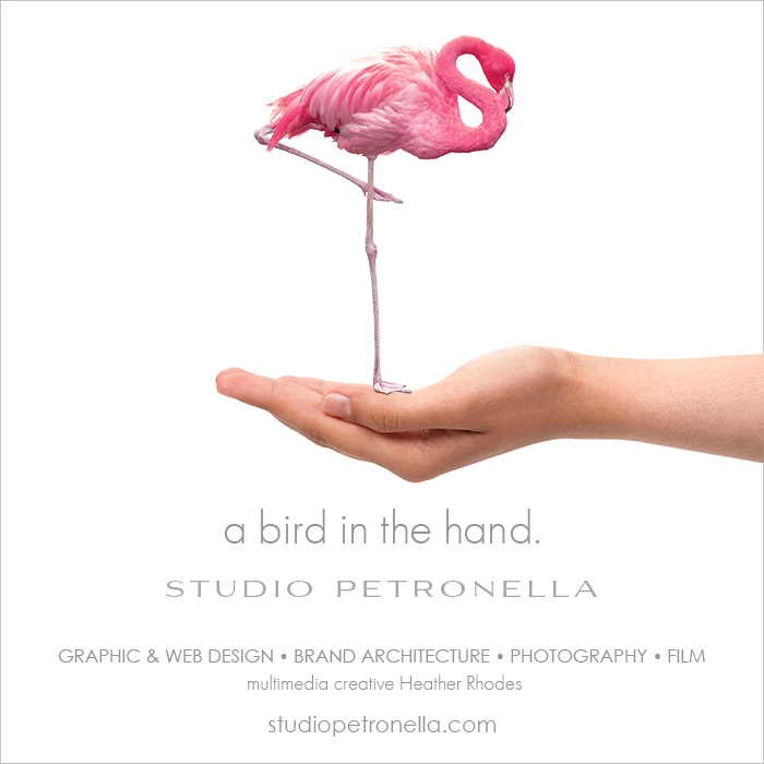 sp bird in the hand © heather rhodes studio petronella alll rights reserved.jpg