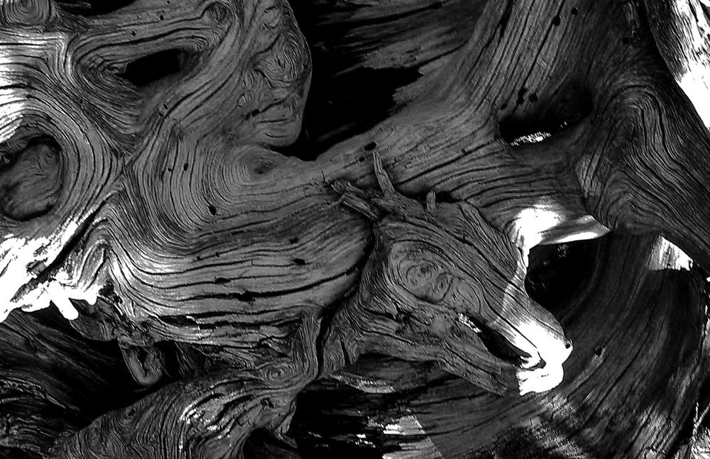 dead_tree2.jpg