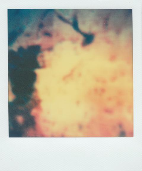 bruise-21 copy.jpg
