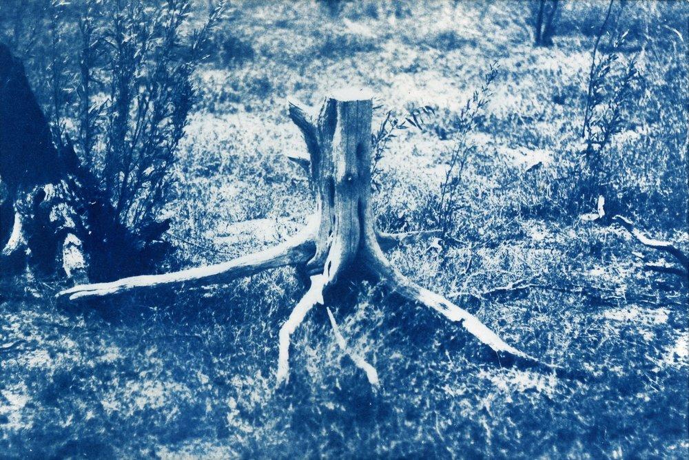stump001.jpg