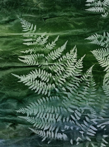 Backyard Fern (Mickey Lawler)