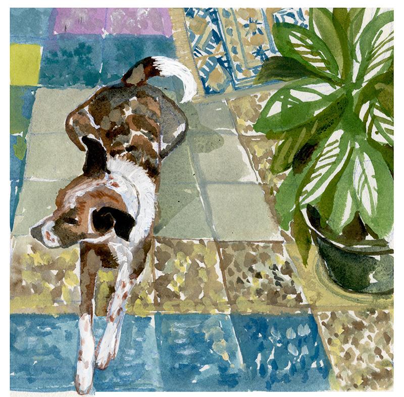 charlie.tile.rug.plant.800.jpg