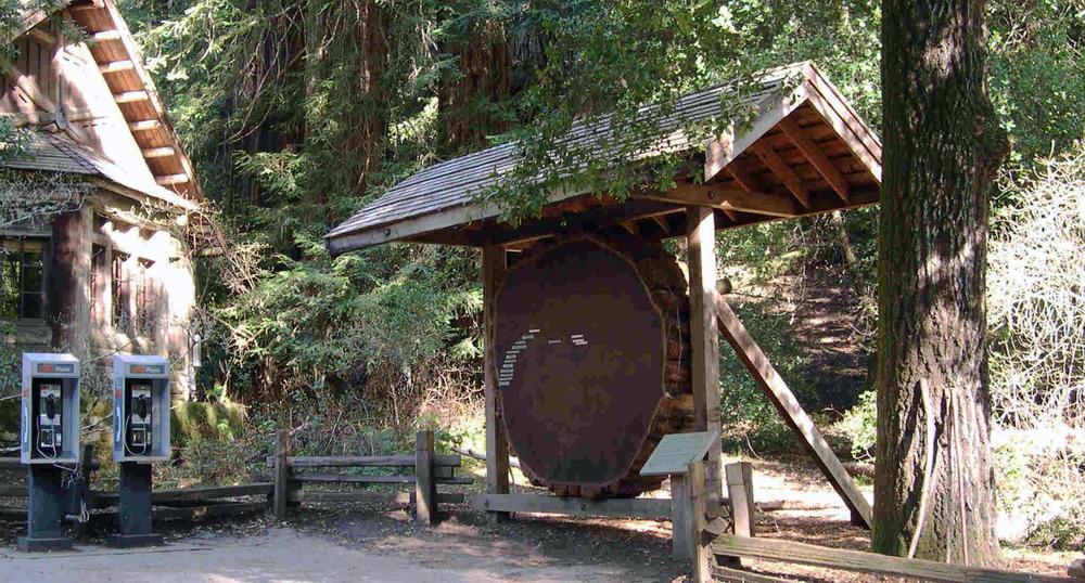 Vertigo - Communing With The Redwoods