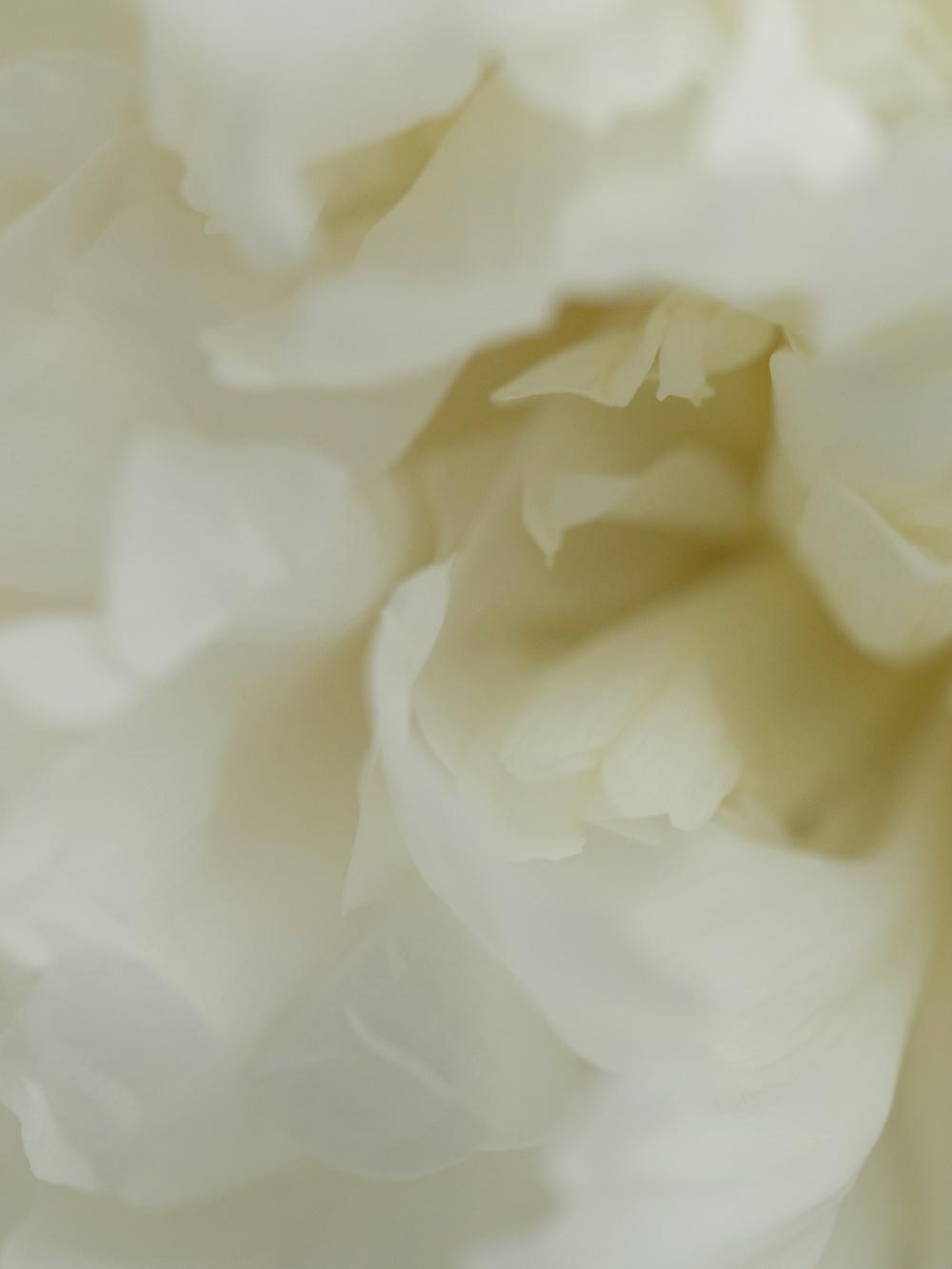 whitetwo.jpg