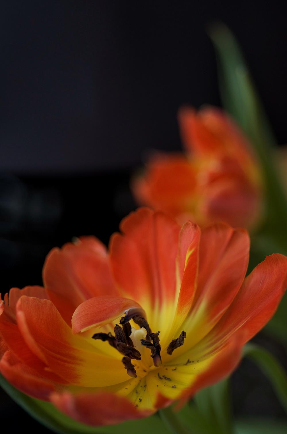tulipbowl.jpg