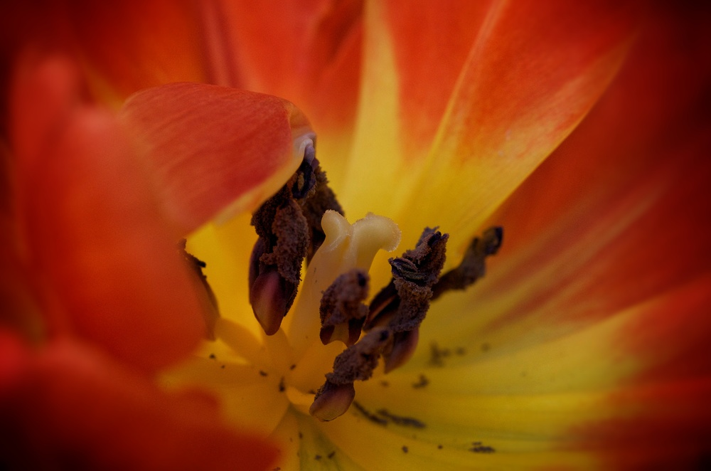 tulipwow.jpg
