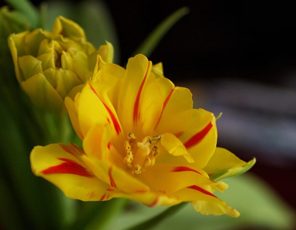 yellowduo.jpg