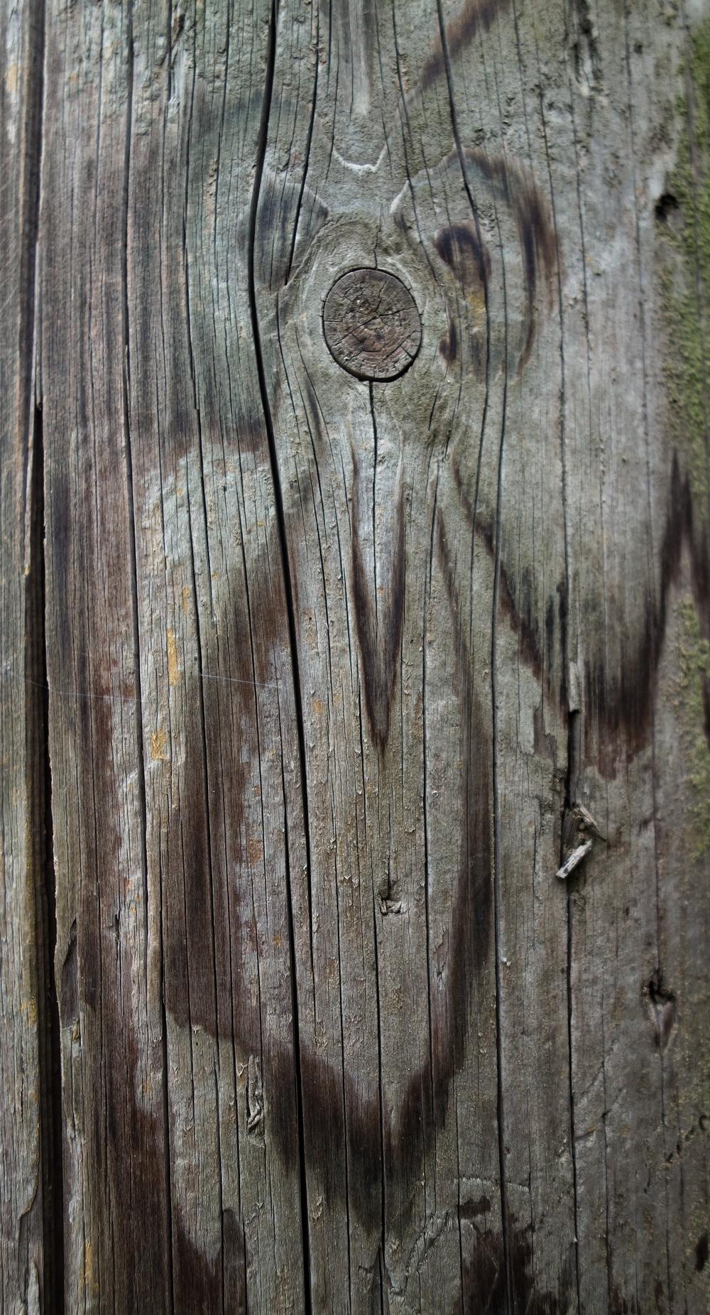 Telegraph pole Meerkat
