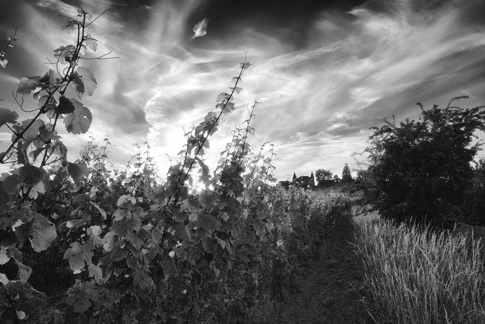 Rheingau twilight