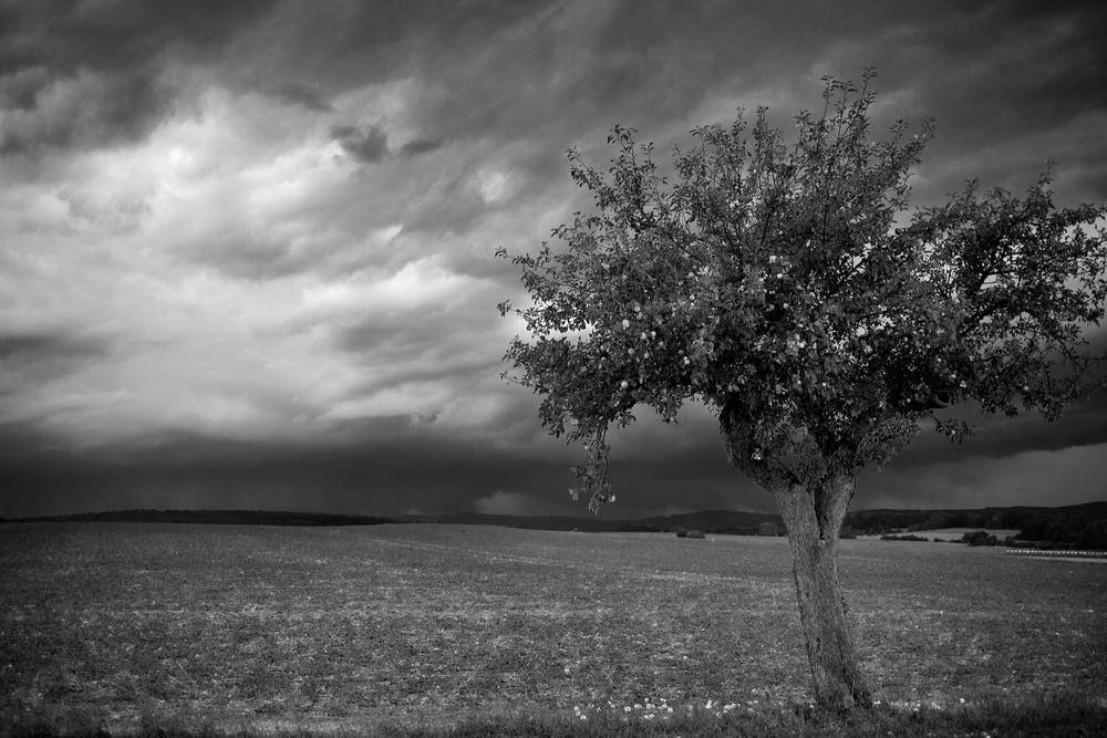 Stormy Harz