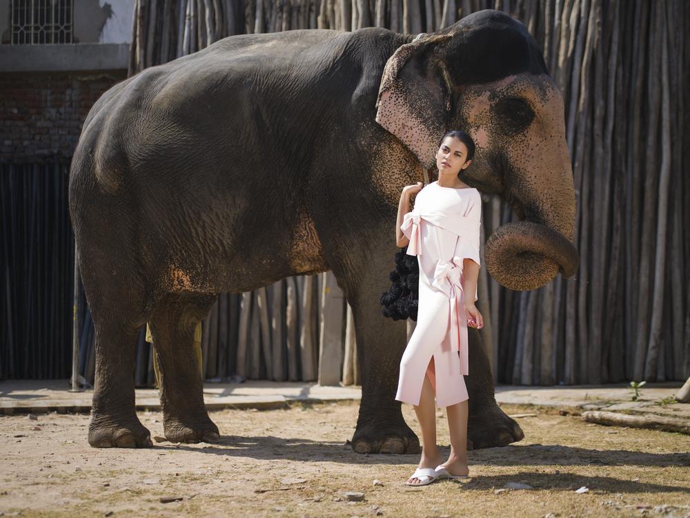 Elephant Queen.jpg