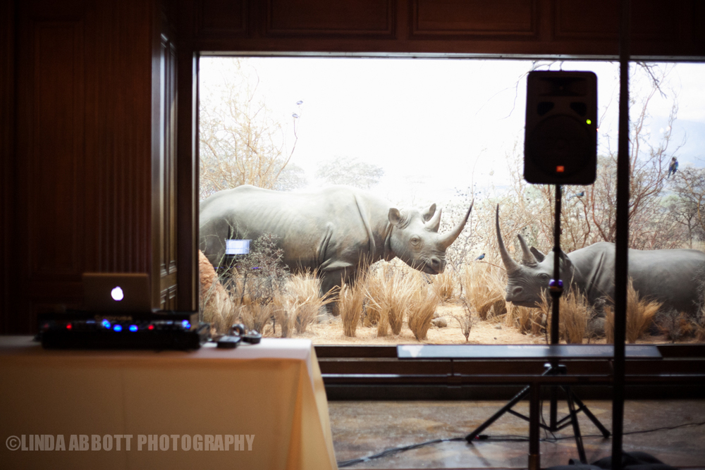 NHM_wedding_rhino_LindaAbbott.jpg