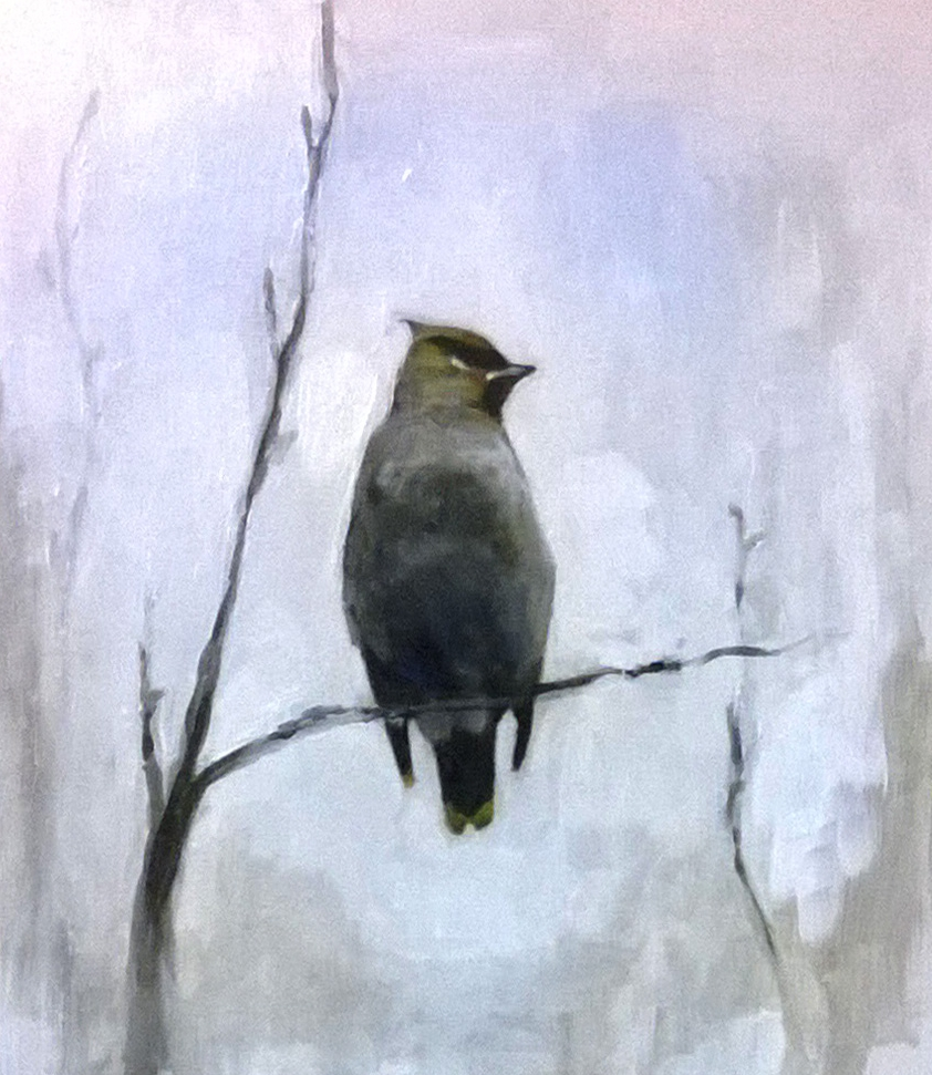 WAXWING large.jpg
