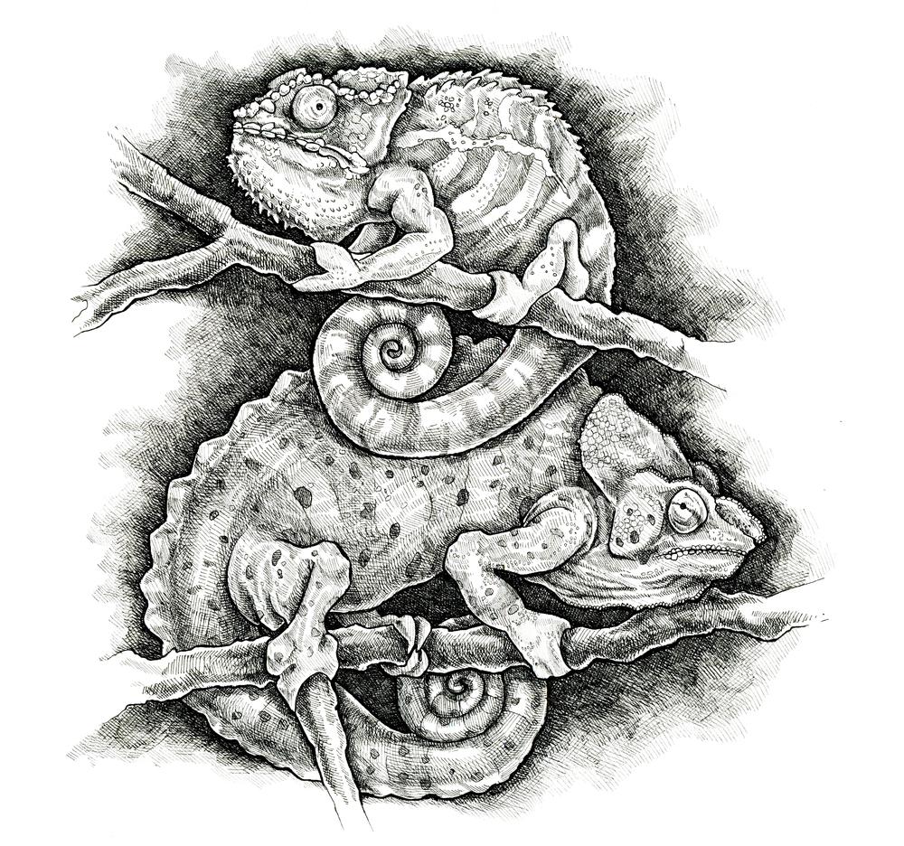 """""""Chameleons"""""""