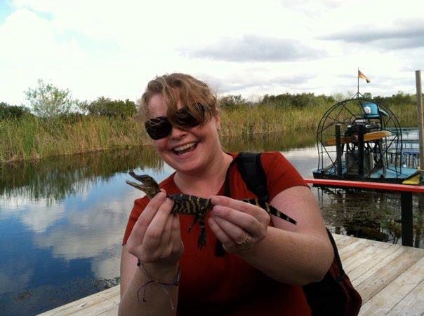 Baby alligator in the Everglades.