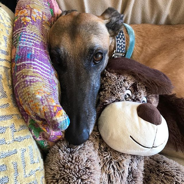 Luz showing off his skills which include relaxing on the couch and playing with toys.