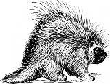 porcupine_rodent_clip_art.jpg