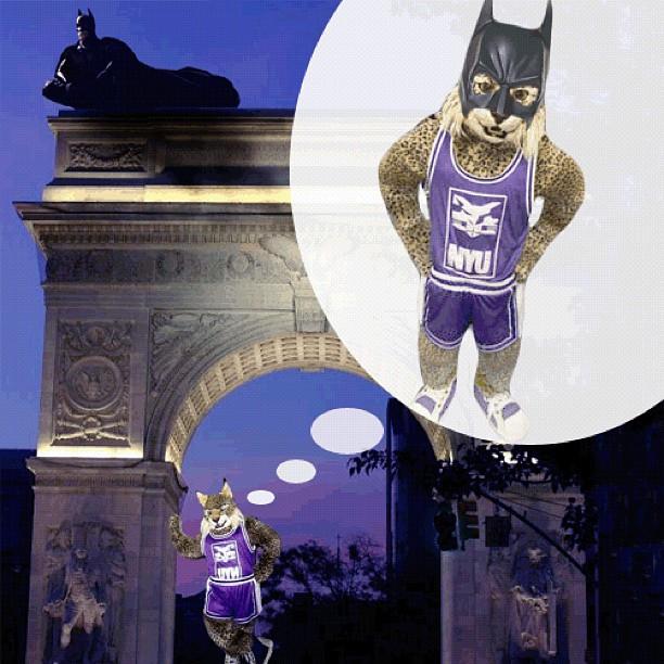 Bobcat? Batman? Bobbatman!!!