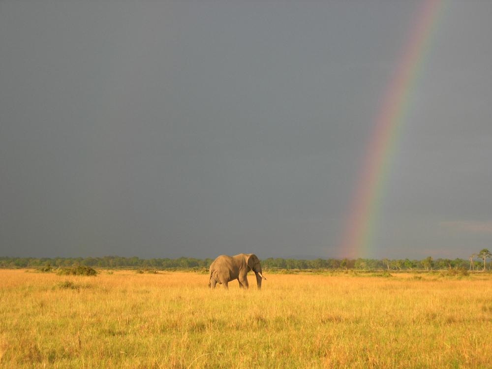 Elephant with rainbow. Maasai Mara, Kenya, 2008.