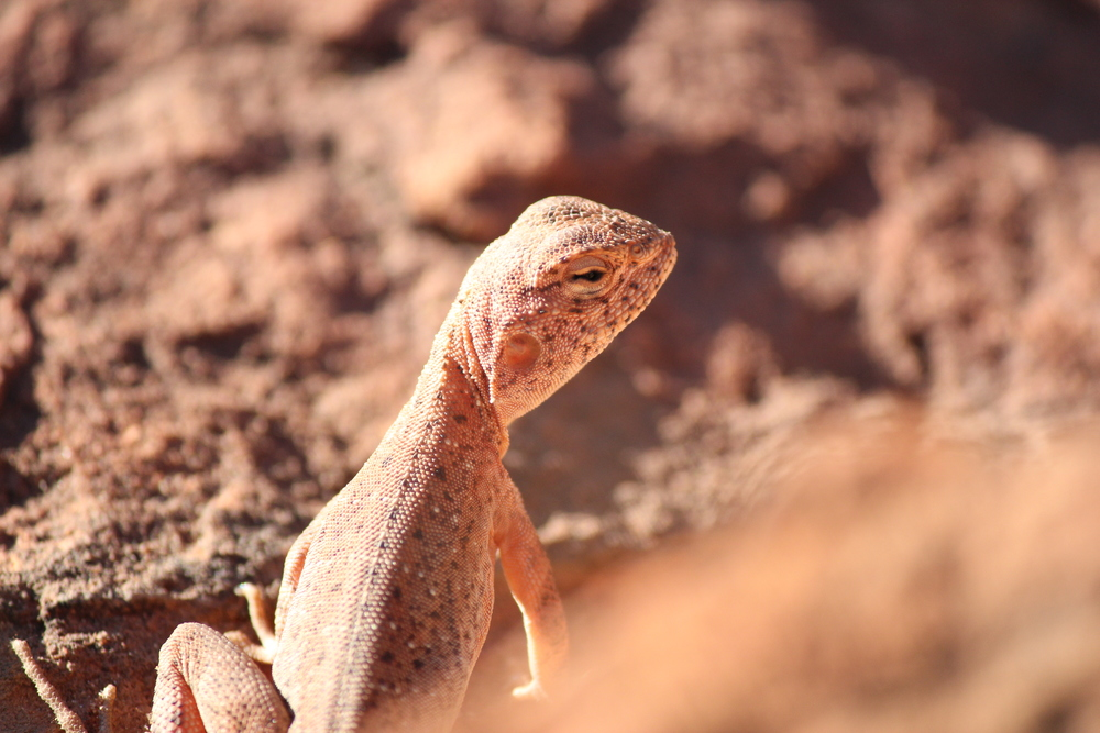 A slightly different angle of the same dragon. Watarrka National Park, Northern Territory, 2012. Photo by Rebecca Sullivan.