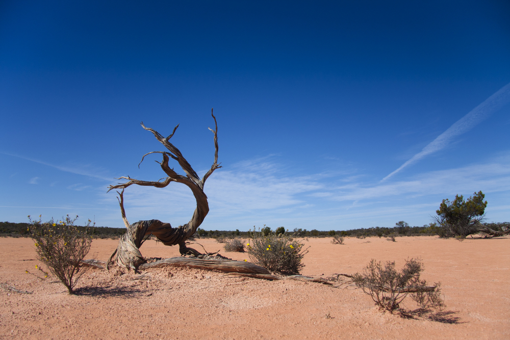 The Claypan. Gluepot Reserve, South Australia, 2011. Photo by Tobias Hayashi.