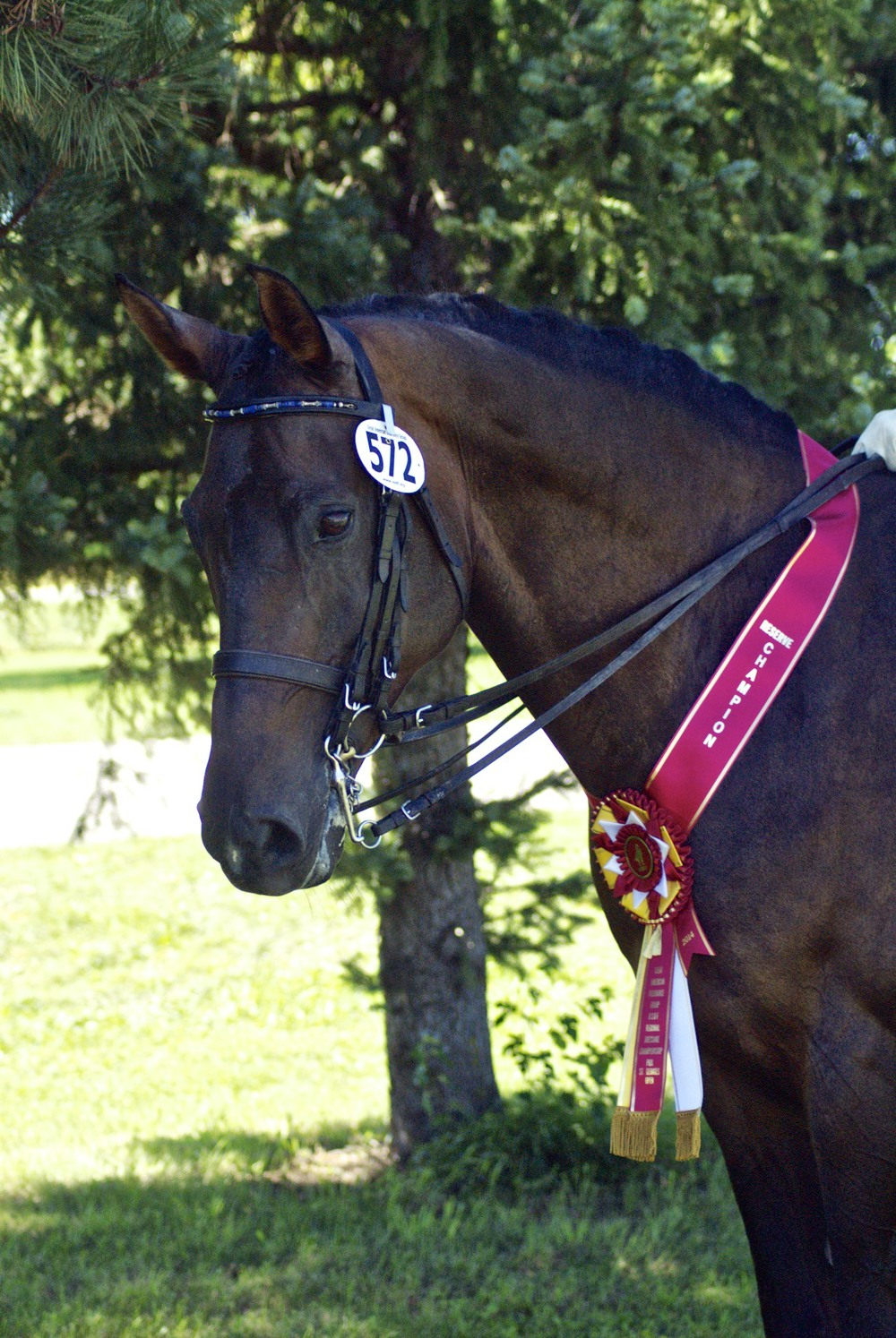 Paddington, owned by Leslie Burket, and Martin Kuhn won both the PSG & I1 highpoints.