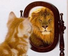 cat lion-2.jpg