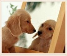Dog_looks_at_himself-2.jpg